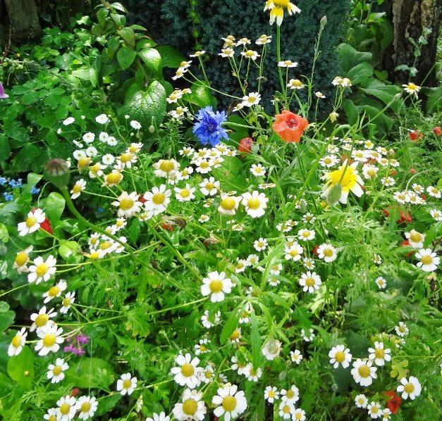 Wilde bloemen | tuin | buitenhuisje
